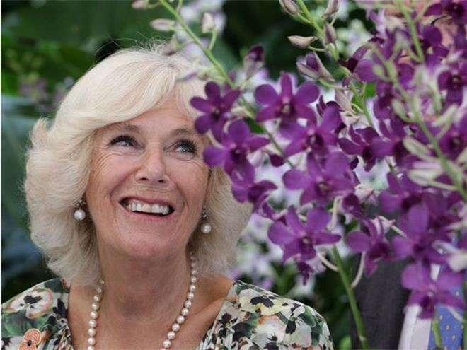 Орхидея «Герцогиня Корнуольская»